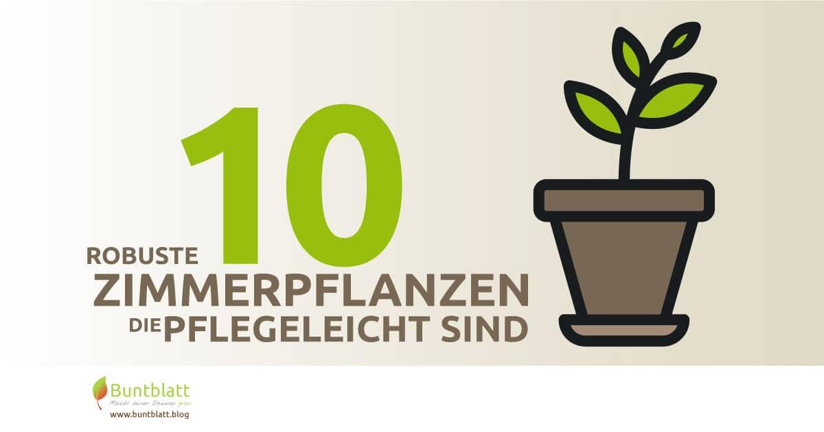 10 Robuste Zimmerpflanzen Die Wirklich Pflegeleicht Sind