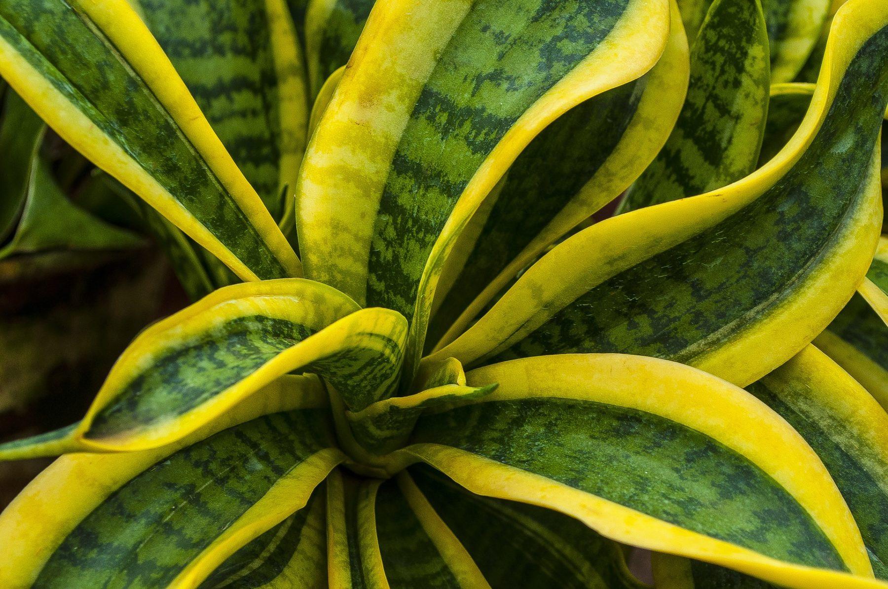 10 robuste Zimmerpflanzen, die wirklich pflegeleicht sind