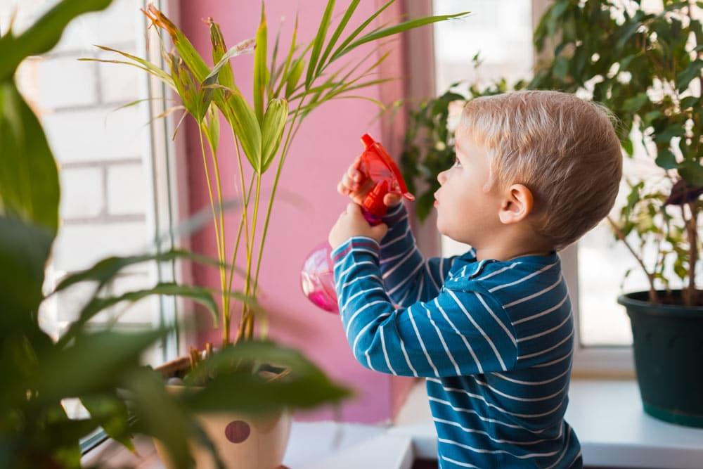 Kind besprüht Zimmerpflanzen mit Wasser