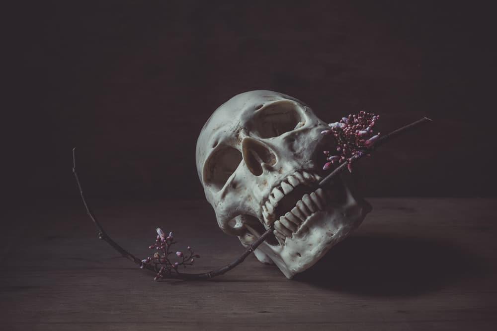 Totenschädel mit dekorativer Pflanze