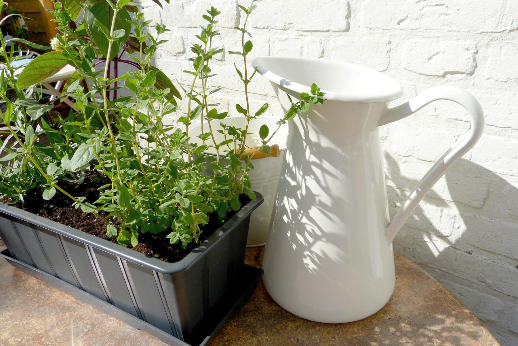 kr uter auf dem balkon pflanzen mit dieser anleitung. Black Bedroom Furniture Sets. Home Design Ideas