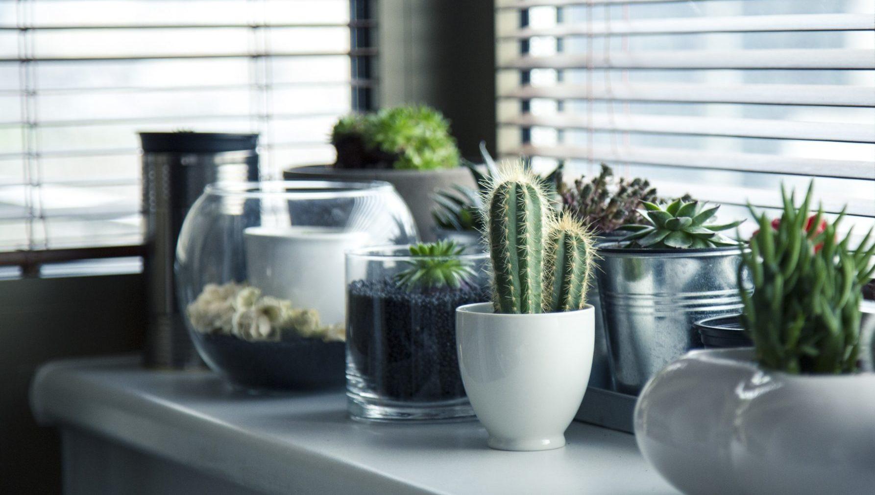 8 Robuste Zimmerpflanzen Die Besonders Wenig Wasser Brauchen