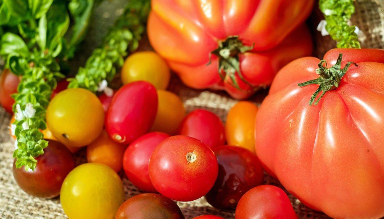 tomaten selbst anbauen lohnt sich immer. Black Bedroom Furniture Sets. Home Design Ideas