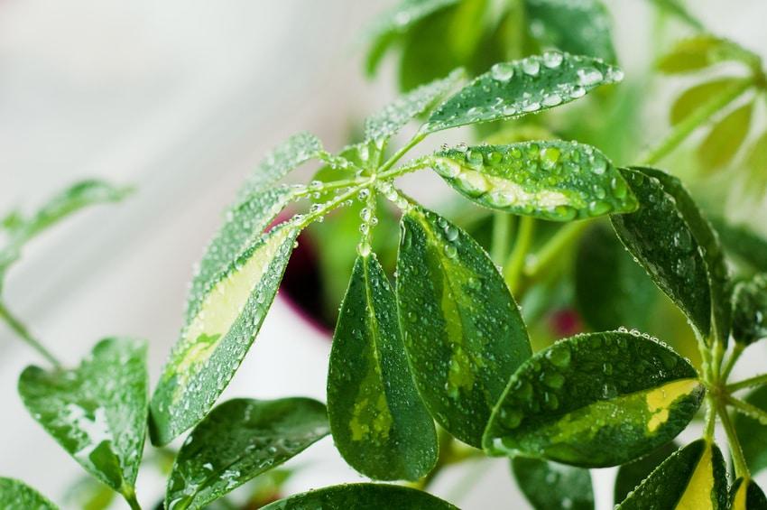 Zimmerpflanzen | Fünf Zimmerpflanzen, die schnell wachsen
