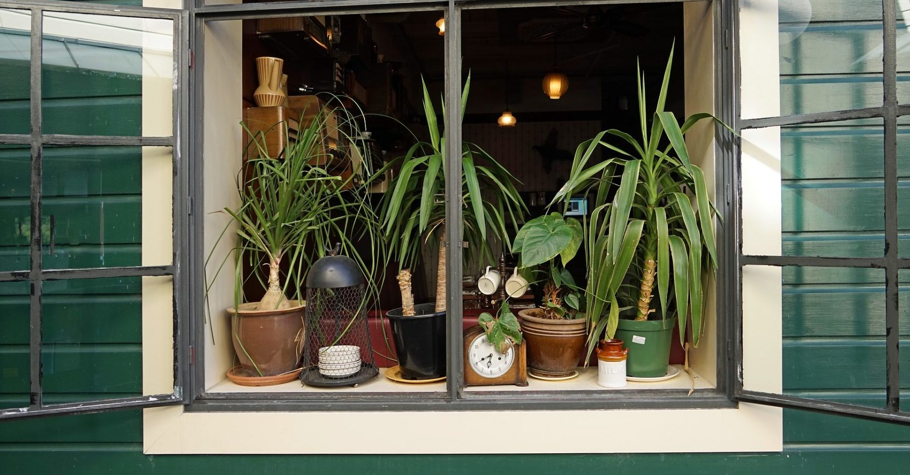 so d ngst du deine zimmerpflanzen richtig. Black Bedroom Furniture Sets. Home Design Ideas
