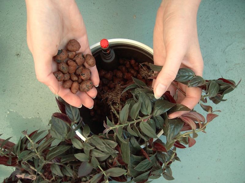 Zimmerpflanzen In Hydrokultur Wie Funktioniert Das