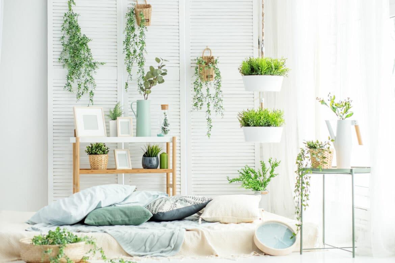 7 hängende Zimmerpflanzen, die besonders beliebt sind