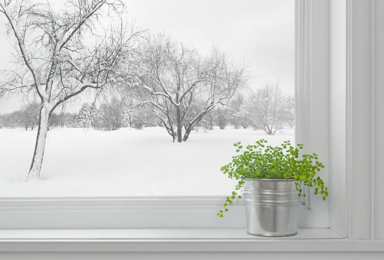 Zimmerpflanzen im Winter pflegen – so geht's