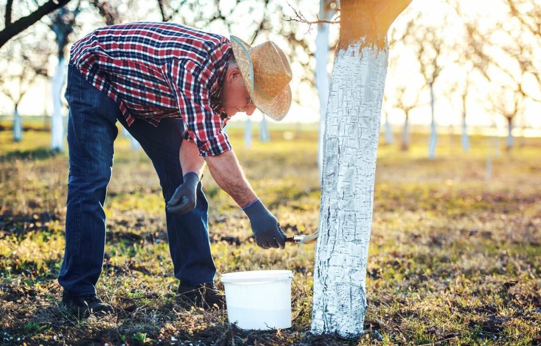 Garten | Kalkanstrich – Warum werden Bäume im Herbst weiß angestrichen?